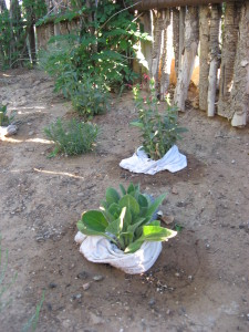 Diapered Plantings